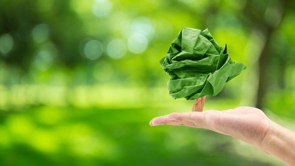 ¿Eliminar el papel es mejor para el medio ambiente?