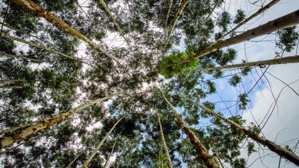Producción de papel y bosques sostenibles